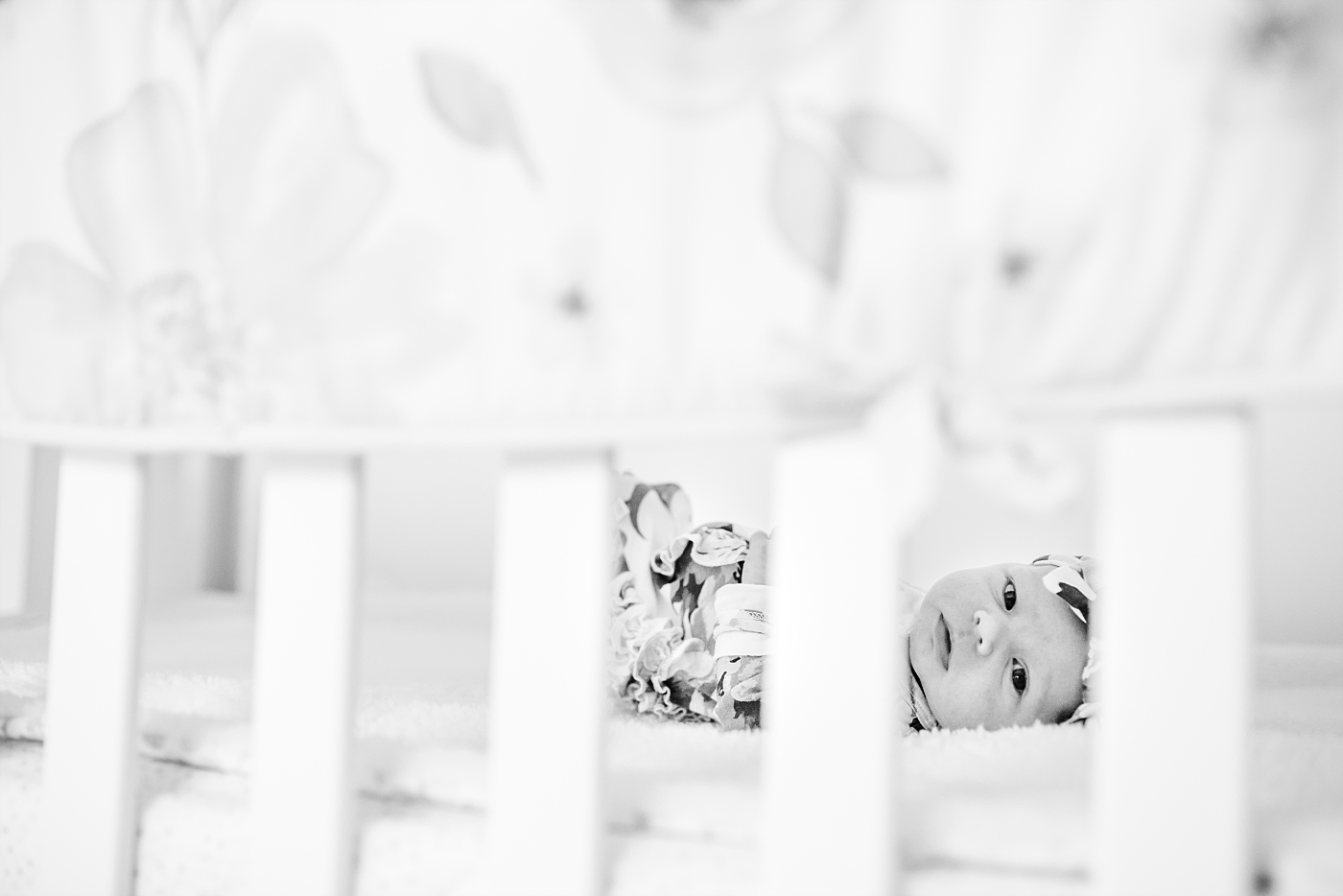 Lifestyle newborn photographer_Milwaukee Family session with a dog