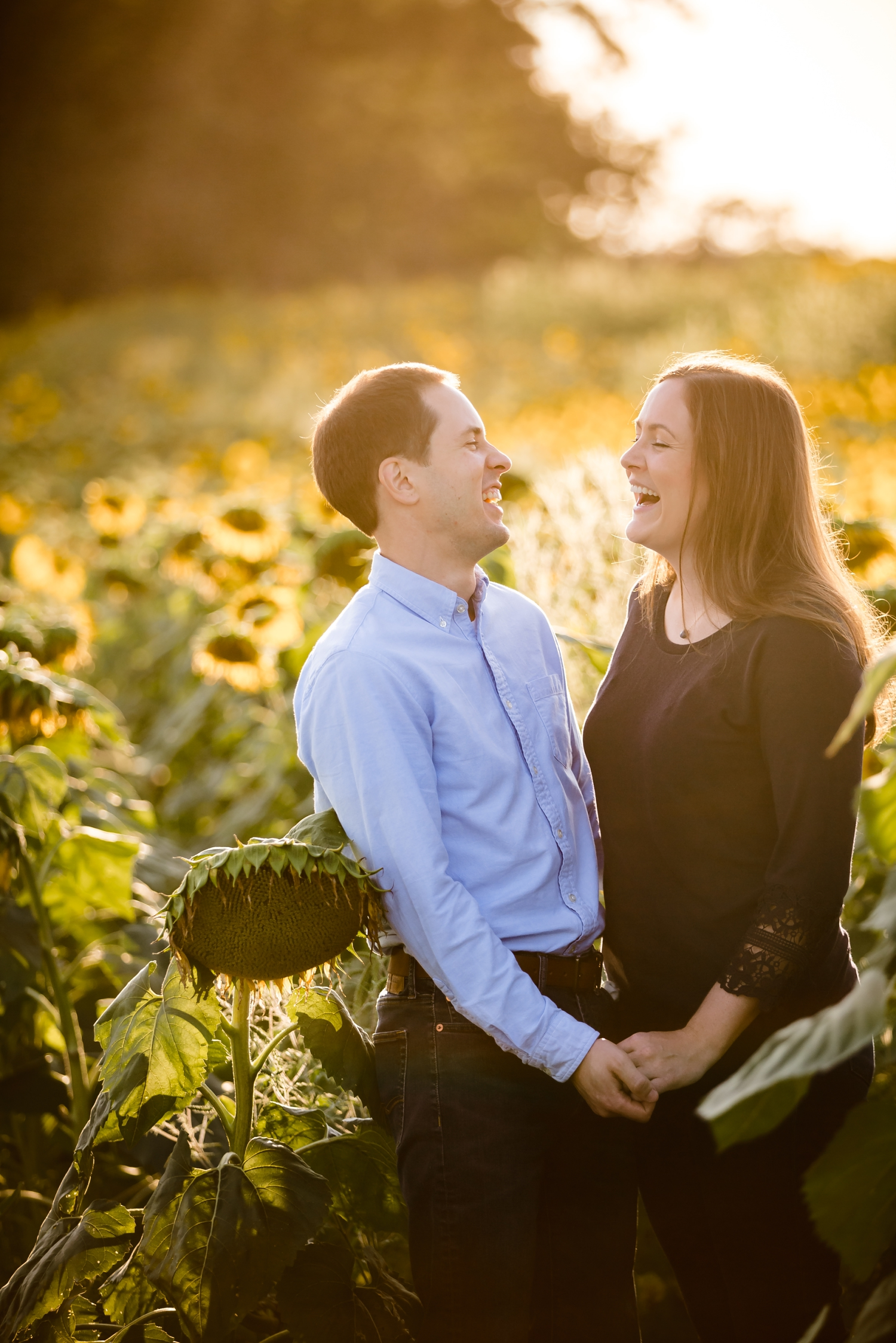 Pope farm sunflower engagement pictures